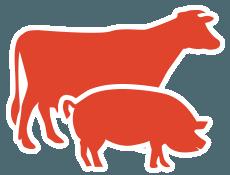 Mix Boeuf/Porc